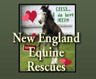 NEER - New England Equine Rescues